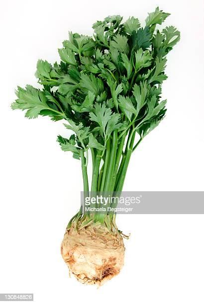 knob celery