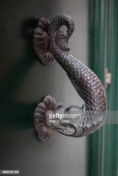 knock, knock - corn snake stock pictures, royalty-free photos & images