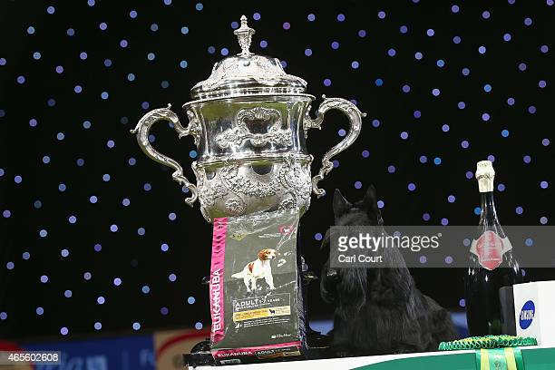 Knopa the Scottish Terrier celebrates winning the Best in Show category of Crufts 2015 on the fourth and final day of Crufts dog show at the National...
