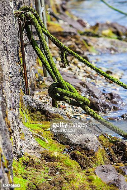 Knot in the harbour of Castro Urdiales, Spain