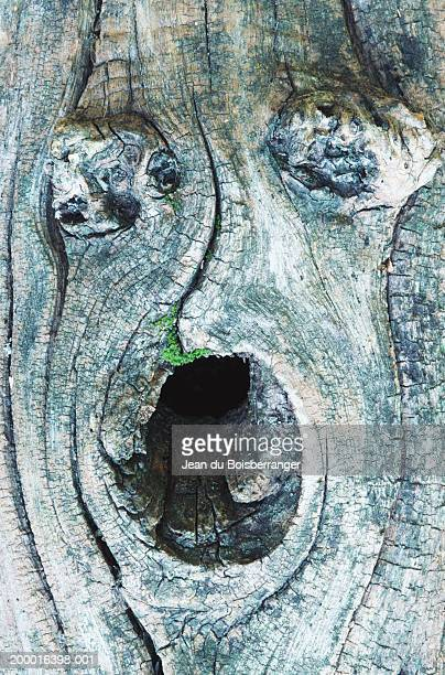 knots in tree trunk forming face, close-up - pareidolia stock pictures, royalty-free photos & images