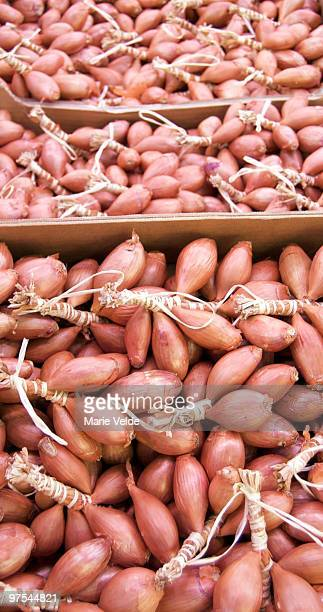 Knotted Shallots