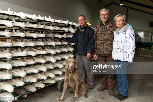 Knud Vest posing together with his wife Lise Vest and their son, Kim Christensen, at a rack with culled minks on November 14, 2020 in Jyllinge,...