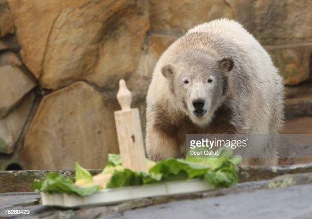Knut the polar bear approaches his oneyear birthday 'cake' at the Berlin Zoo December 5 2007 in Berlin Germany Zoo officials celebrated Knut's one...