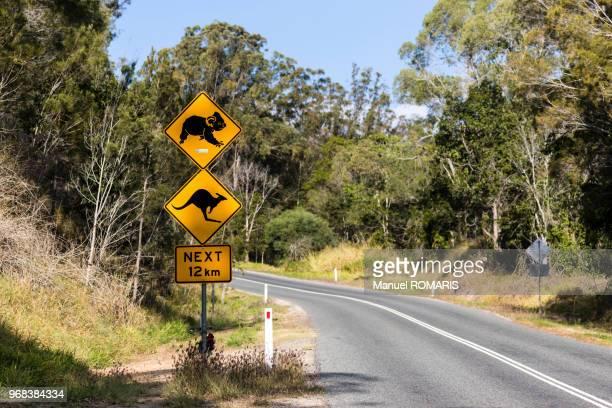 koala and kangaroo road signs, greens creek, australia - wildlife stock pictures, royalty-free photos & images