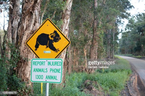 Koala crossing sign board beside a road