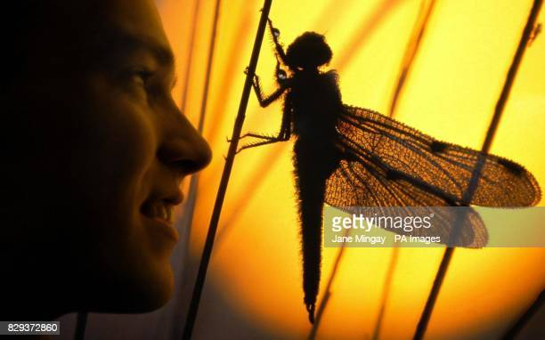 Kobe Van Looveren from Belgium looks at his award winning image entitled 'Dragonfly warming up' for which he won the 'Eric Hosking Award ' in the...