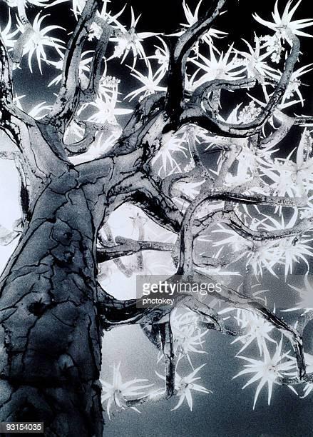 köcherbaum baum - köcherbaum stock-fotos und bilder