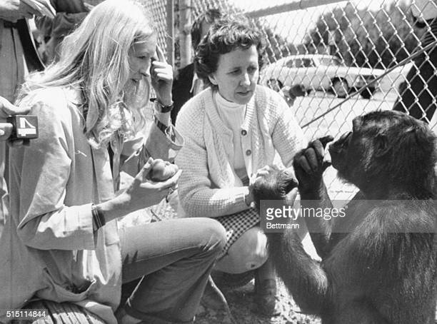 Koko a four and a half year old gorilla who has been taught some sign language made her debut her 5/19 At left Francine 'Penny' Patterson graduate...