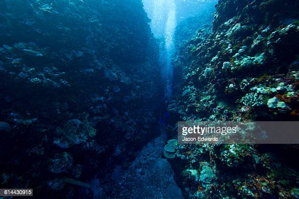 Scuba divers swimming through a coral canyon in a tropical reef.
