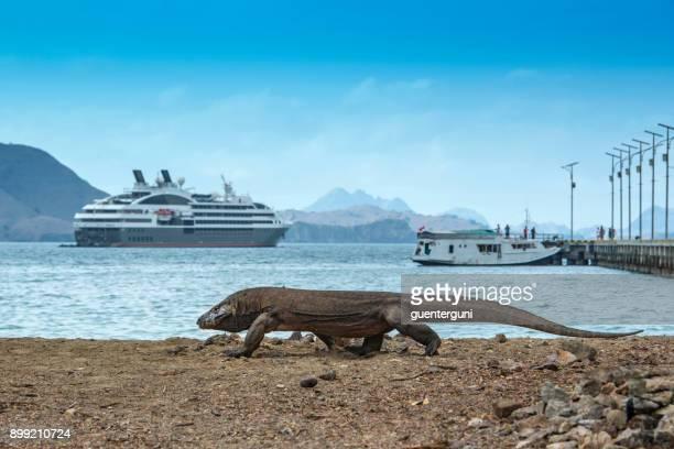 dragón de komodo en la playa frente a un crucero - komodo fotografías e imágenes de stock