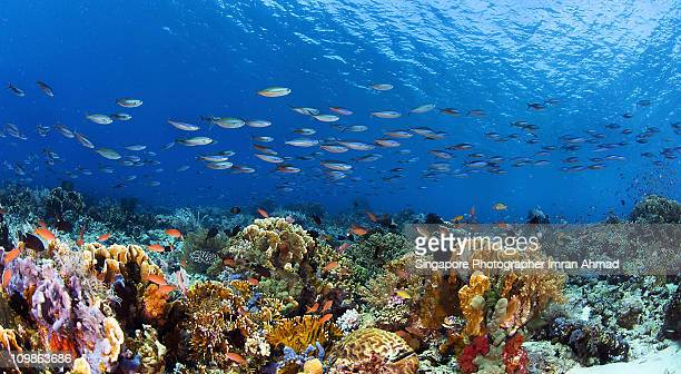 komodo wide - reef stock pictures, royalty-free photos & images