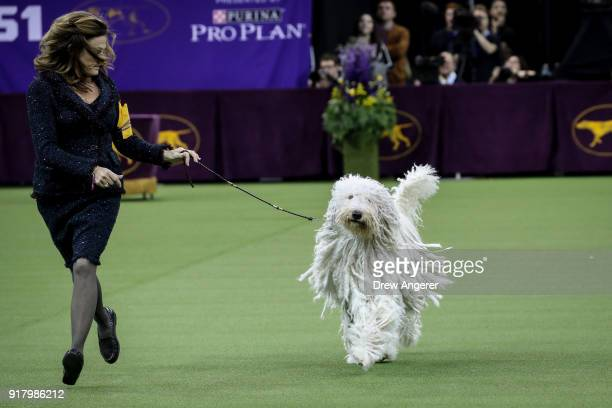 Komondor competes in the working group on the final night of the 142nd Westminster Kennel Club Dog Show at The Piers on February 13 2018 in New York...
