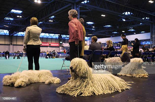 Komondor dogs relax before being judged on the second day of the annual Crufts dog show at the National Exhibition Centre on March 11 2011 in...