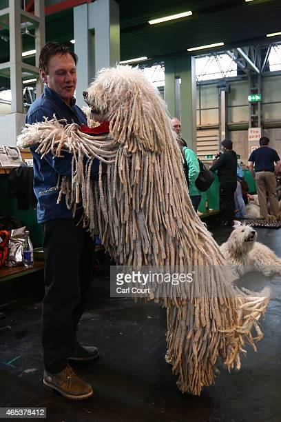 Komondor jumps on its owner on the second day of Crufts dog show at the National Exhibition Centre on March 6 2015 in Birmingham England First held...