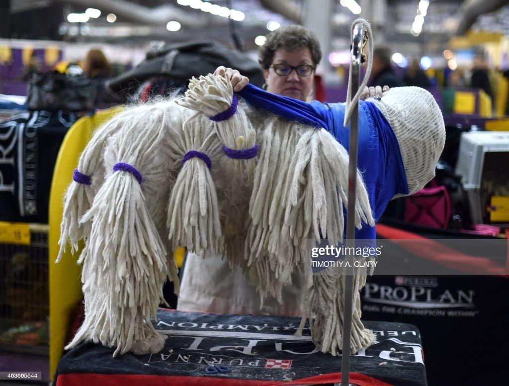 US-WESTMINSTER DOG SHOW : News Photo