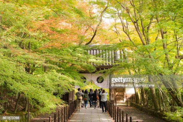 komyoji temple - christinayan ストックフォトと画像
