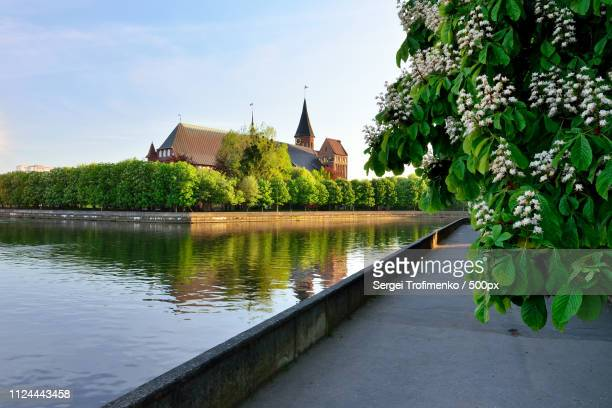 konigsberg cathedral on kneiphof island. kaliningrad, formerly k - east prussia stock pictures, royalty-free photos & images