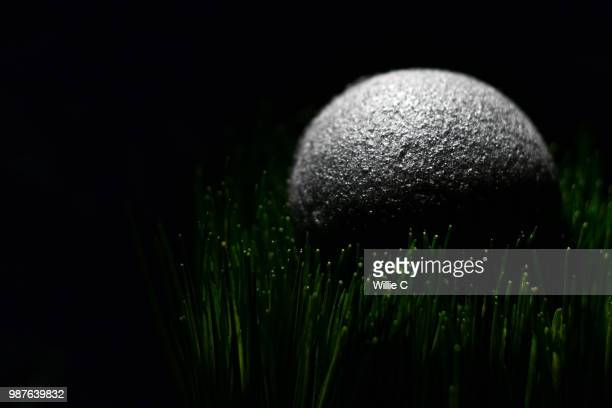 konjac sponge - konjac stock pictures, royalty-free photos & images