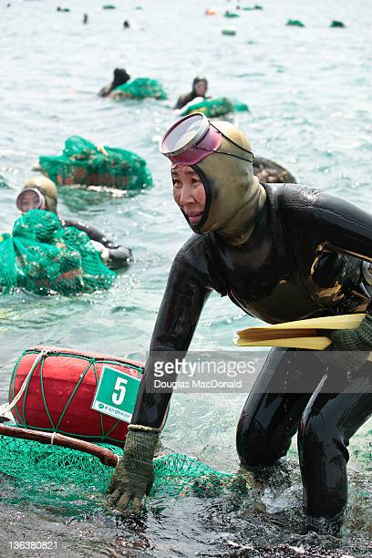 A Korean diving woman leaves the water after catching a load of shellfish in her nets in Sagye Jeju Island South Korea