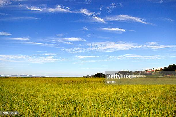 korean rice field landscape - parallel stock pictures, royalty-free photos & images