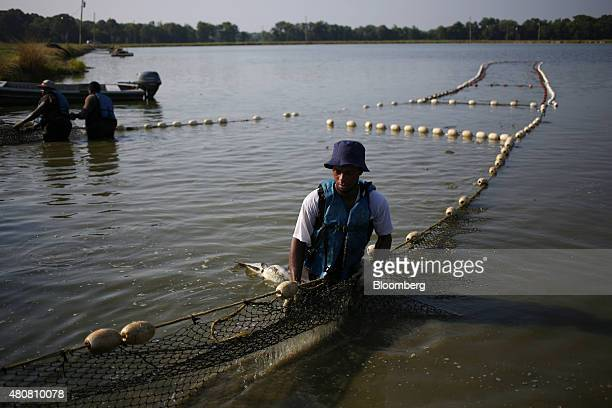 Korey Carlisle of New Bern Alabama US 'rides the mud line' with a fishing net while harvesting farmraised catfish in Uniontown Alabama US on Friday...