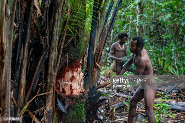 korowai man is cutting a sago palm, new guinea, indonesia - papua new guinea stock pictures, royalty-free photos & images