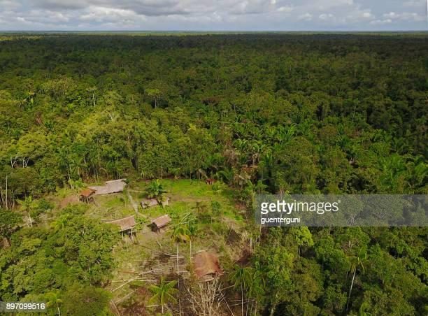 Casas de árbol Korowai en una selva claro, West Papua, Indonesia