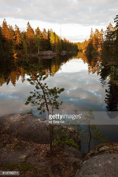korpilampi lake in the evening sun - espoo stock pictures, royalty-free photos & images