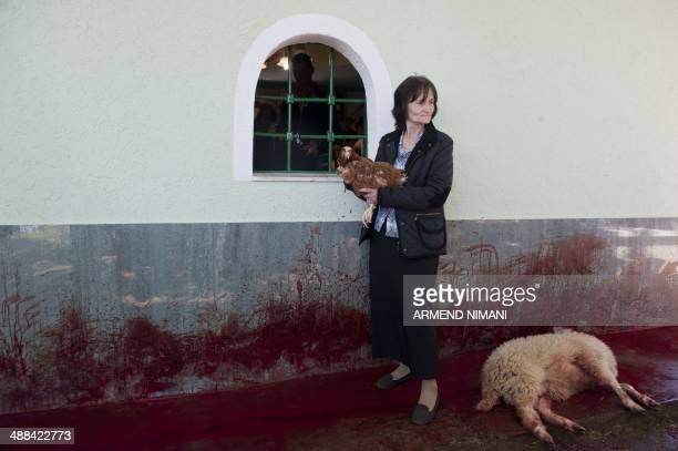 A Kosovo Albanian woman holds a chicken near a slaughtered sheep in the village of Babaj Bokes after sheep were slaughtered on May 6 2014 during the...