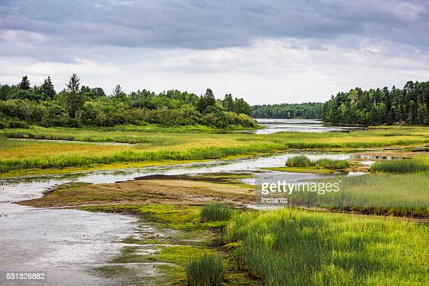 kouchibouguac national park wetland - new jersey stock pictures, royalty-free photos & images