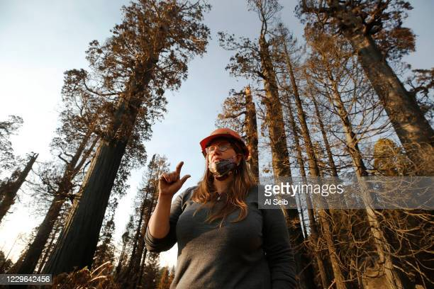 Kristen Shive, Director of Science for Save The Redwoods League on the 530 acres of the privately owned Alder Creek grove explains that when big...