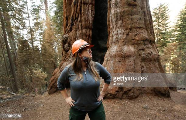 Kristen Shive, Director of Science for Save The Redwoods League Shive at the base of the 3,000-year-old Stagg Tree, the fifth-largest giant sequoia...