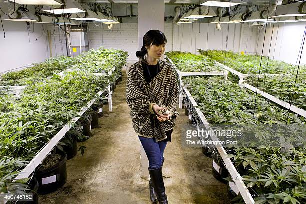 Kristi Kelly inside a medical cannabis cultivation facility in Denver Colorado US on Monday March 4 2013 This is inside a warehouse in Denver and is...
