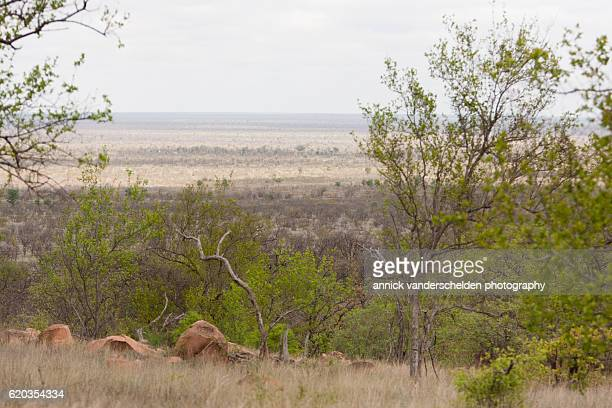 Kruger National Park wilderness landscape.