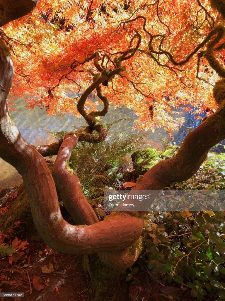 Kubota Japanese Garden Stock Photo | Getty Images