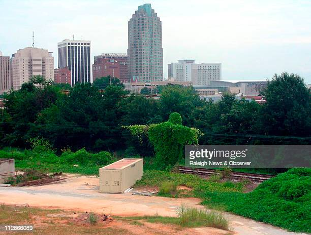 Kudzu vines grow in a shape some refer to as the Kudzu Jesus near the downtown skyline in Raleigh North Carolina