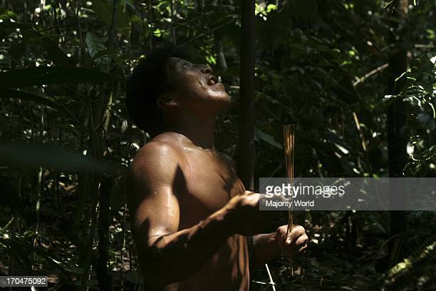 Kue a Huaorani guide for the jungle gets ready to chase a monkey in the forest using the traditional open Cerbatana or blowpipe Coca Orellana...