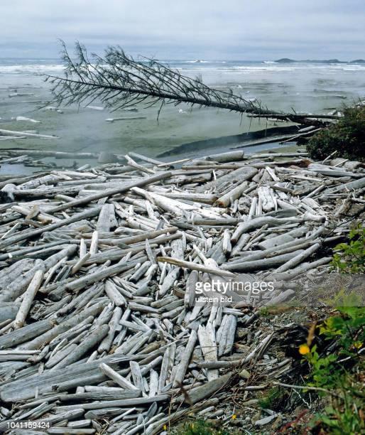 Kuestennebel am Long Beach im Pacific Rim Nationalpark auf Vancouver Island in British Columbia ein wilder naturbelassenen Strand dahinter der...