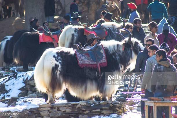 kufri   himachal pradesh   india - shimla stock pictures, royalty-free photos & images