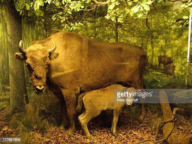 Kuh mit Baby †berseeMuseum Bremen Deutschland Europa Reise