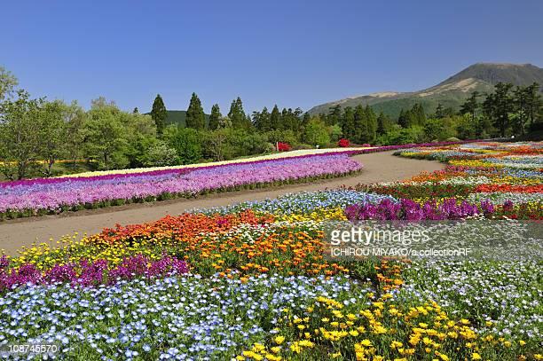 kuju flower park - 大分県 ストックフォトと画像