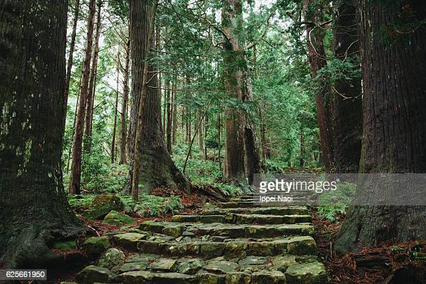 Kumano Kodo ancient pilgrimage trail in forest, Japan