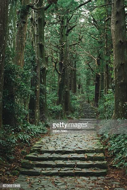 Kumano Kodo pilgrimage path in lush forest, Japan