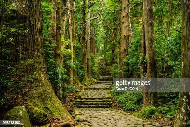 Kumano Kodo pilgrimage path near Nachi Taisha Kii peninsula Japan