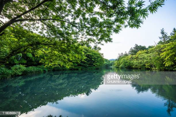 kumobaike (kumoba pond) in karuizawa - river stock pictures, royalty-free photos & images