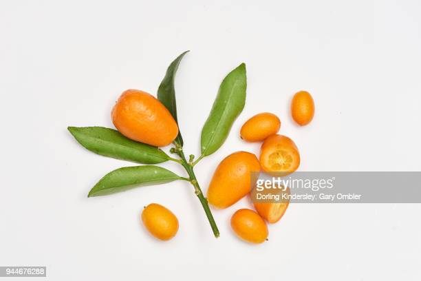 Kumquat fruit scattered on white background shot ovehead with leaves.