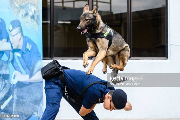 Kunming dog takes part in a training exercise demonstration for the media at the Correctional Services Department Dog Unit Headquarters in the...
