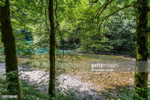 kupa river in risnjak national park - rio kupa - fotografias e filmes do acervo