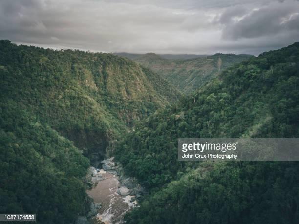 kuranda rainforrest - クランダ ストックフォトと画像